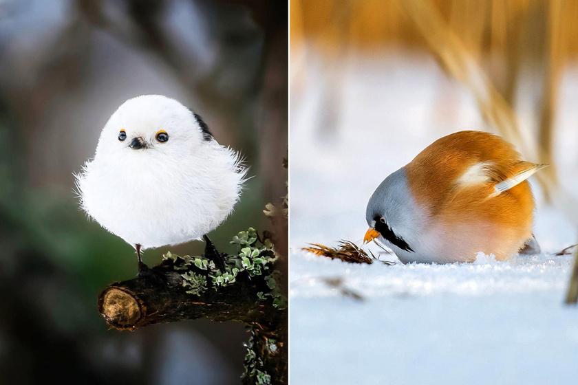 dühös madarak 2 pénzt keresni)